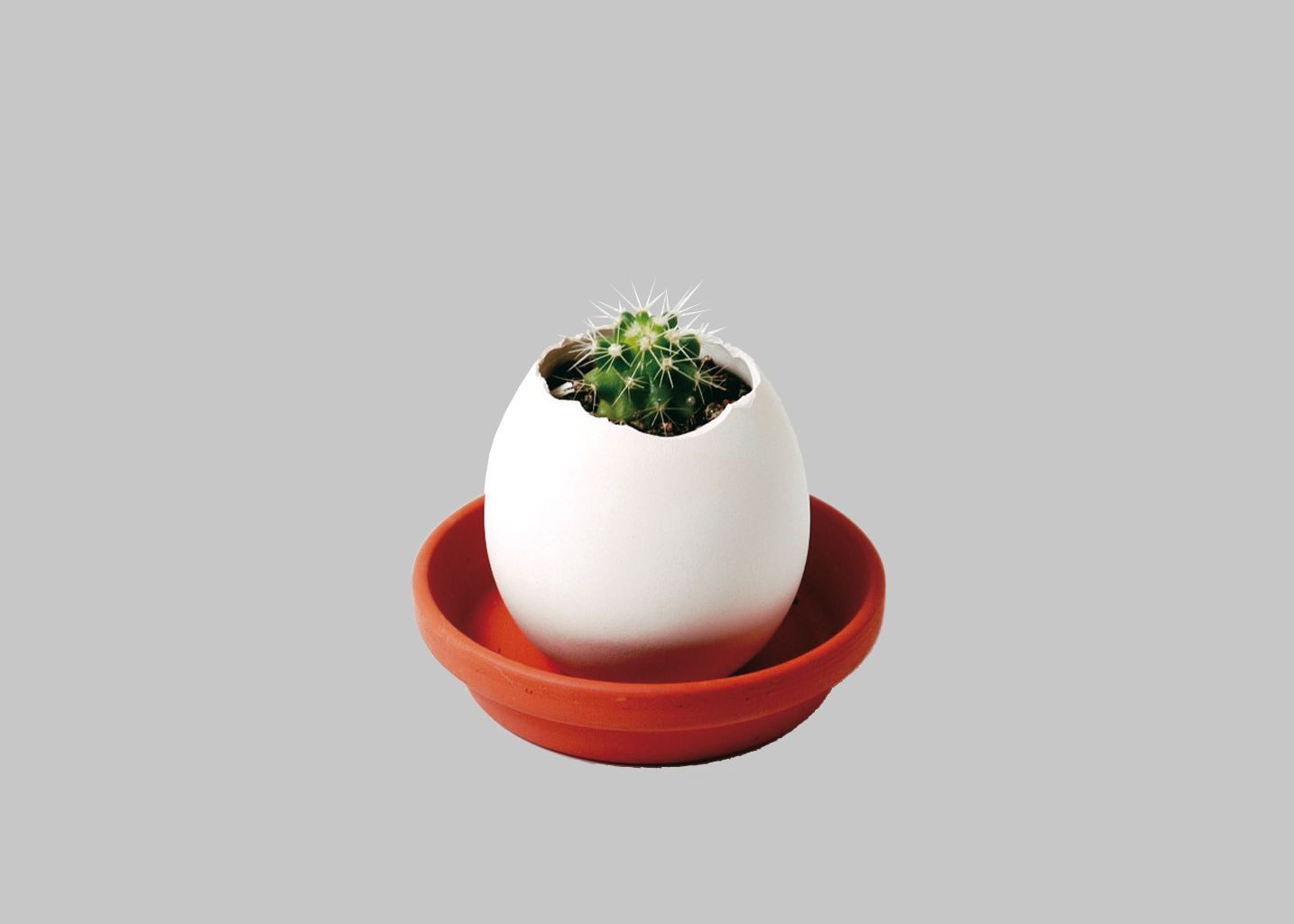 oeuf cactus la boutique cadeaux blanc en vente chez l 39 exception. Black Bedroom Furniture Sets. Home Design Ideas