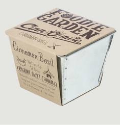 Pot Cinnamon Basilic