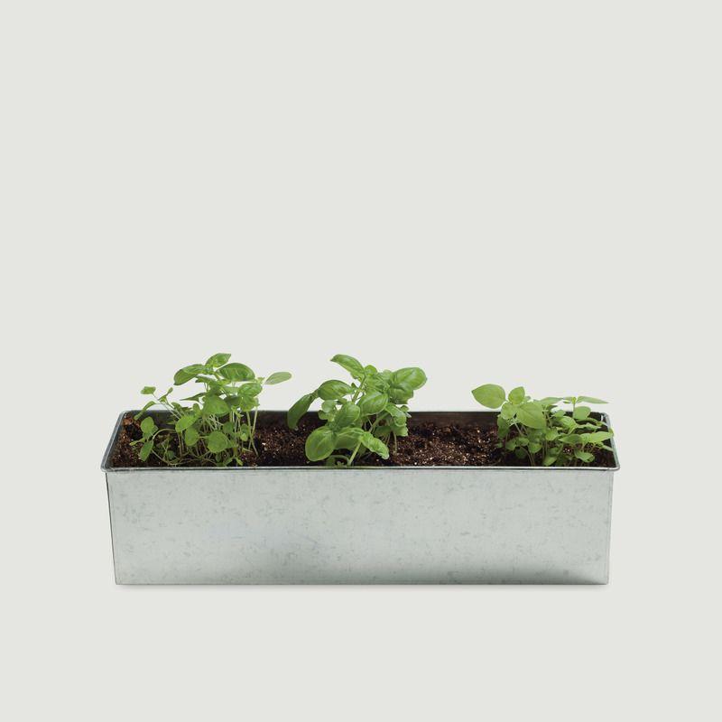 Kit de Jardinage Basil-O-Holic - Noted