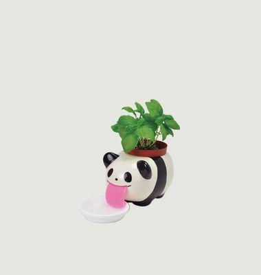 Pot Peropon Papa Panda Basilic