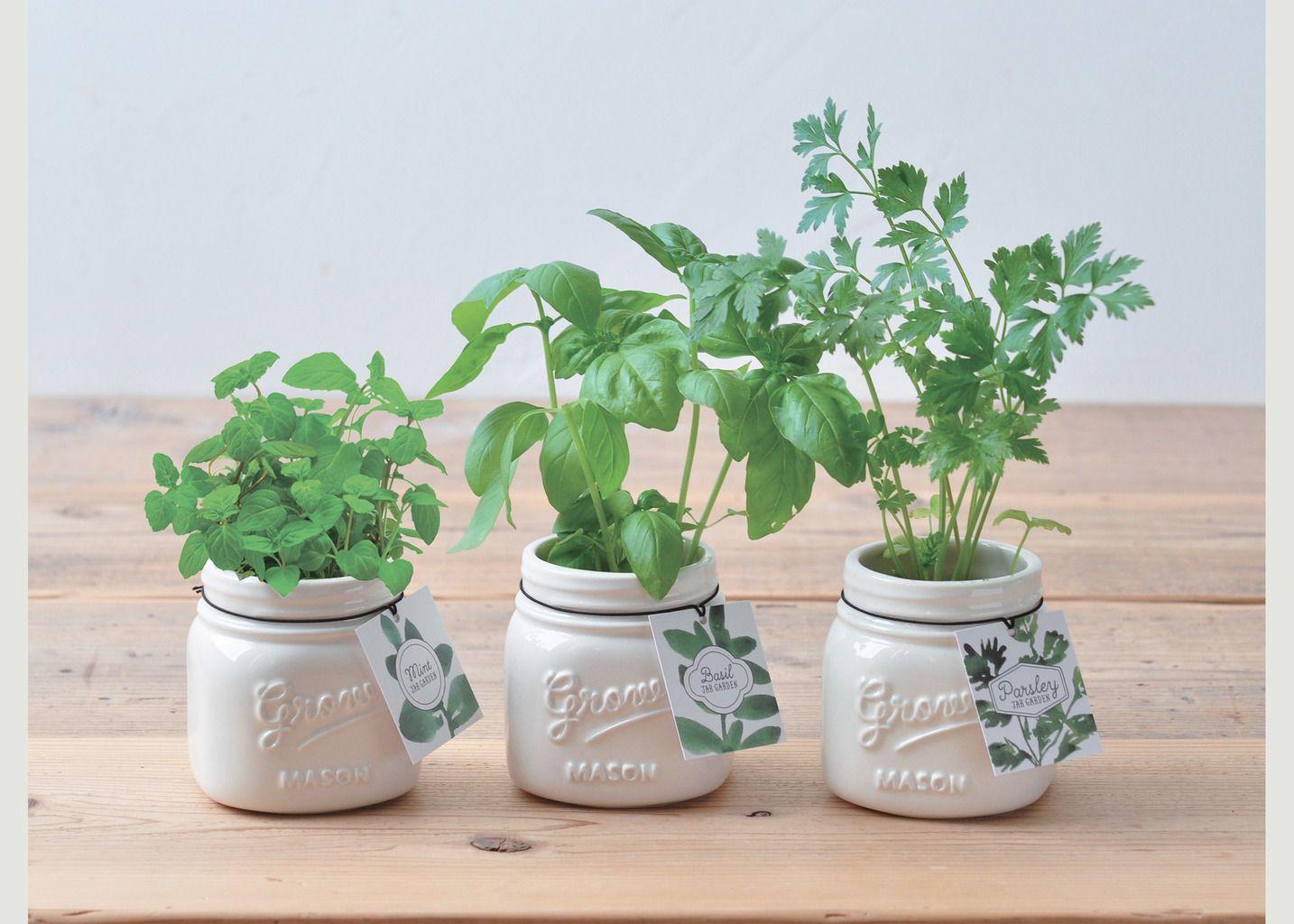 Jar Garden - Persil d'Italie - Noted
