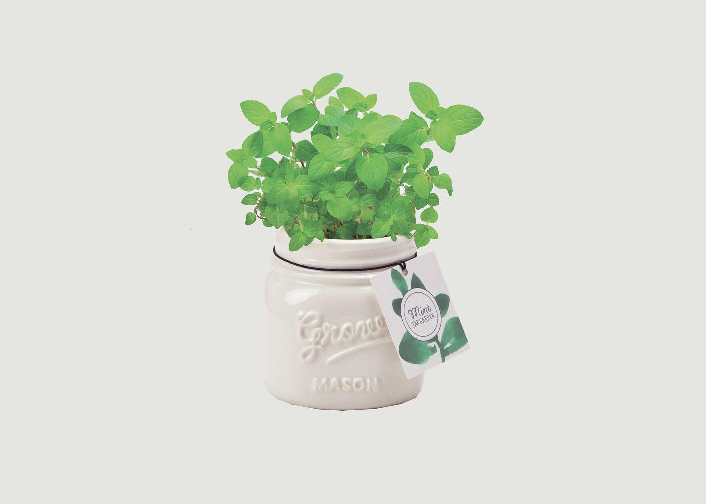 Jar Garden - Menthe - Noted