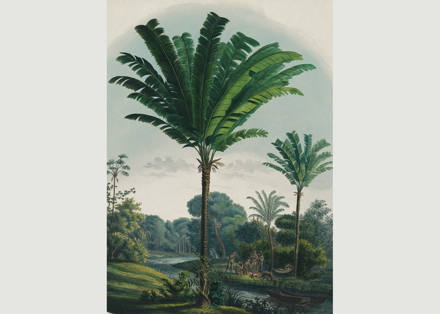 The Book Of Palms - Taschen
